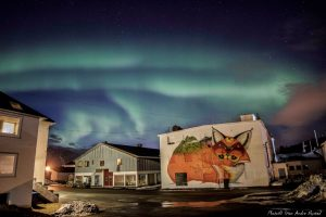 Picture of The Fox under the northern light by Stian Andre Nystad