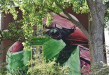 Dopie street art festival amsterdam